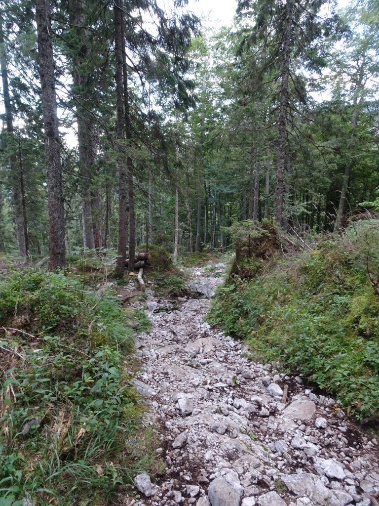 "Trail back towards ""Bodenbauer"""
