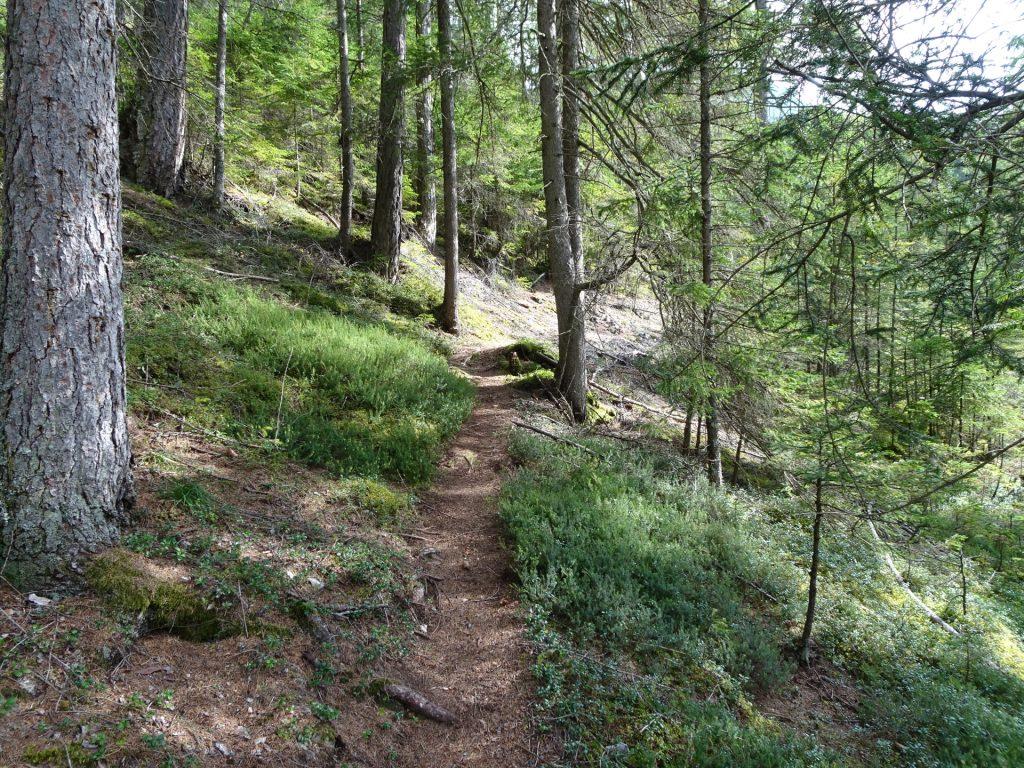 """Shortcut trail up to the forest street towards """"Klammboden / Pribitz"""""""