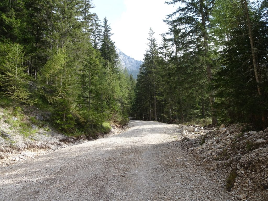 """Forest road towards """"Klammboden / Pribitz"""""""