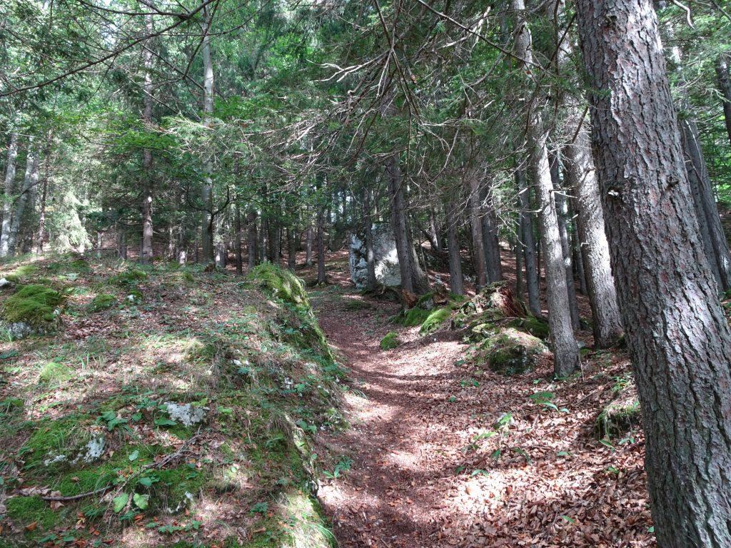 "Trail towards ""Pribitz"""