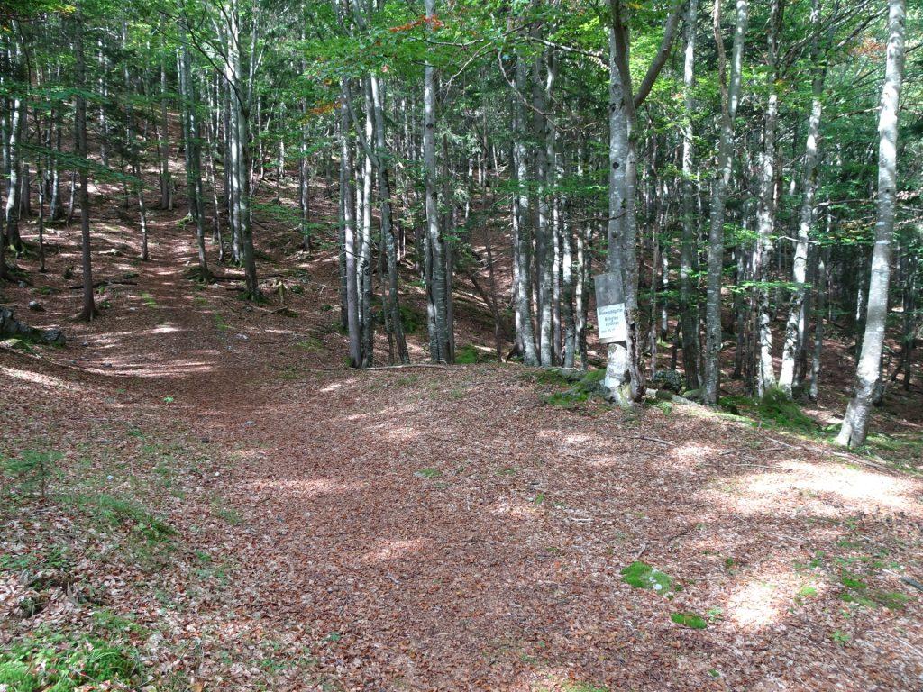 """The trail towards """"Pribitz"""""""