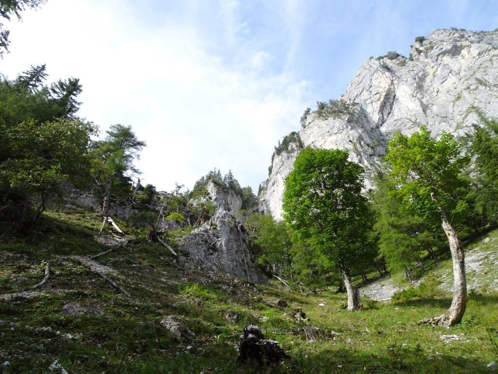 "The trail upwards to ""Pribitz"""