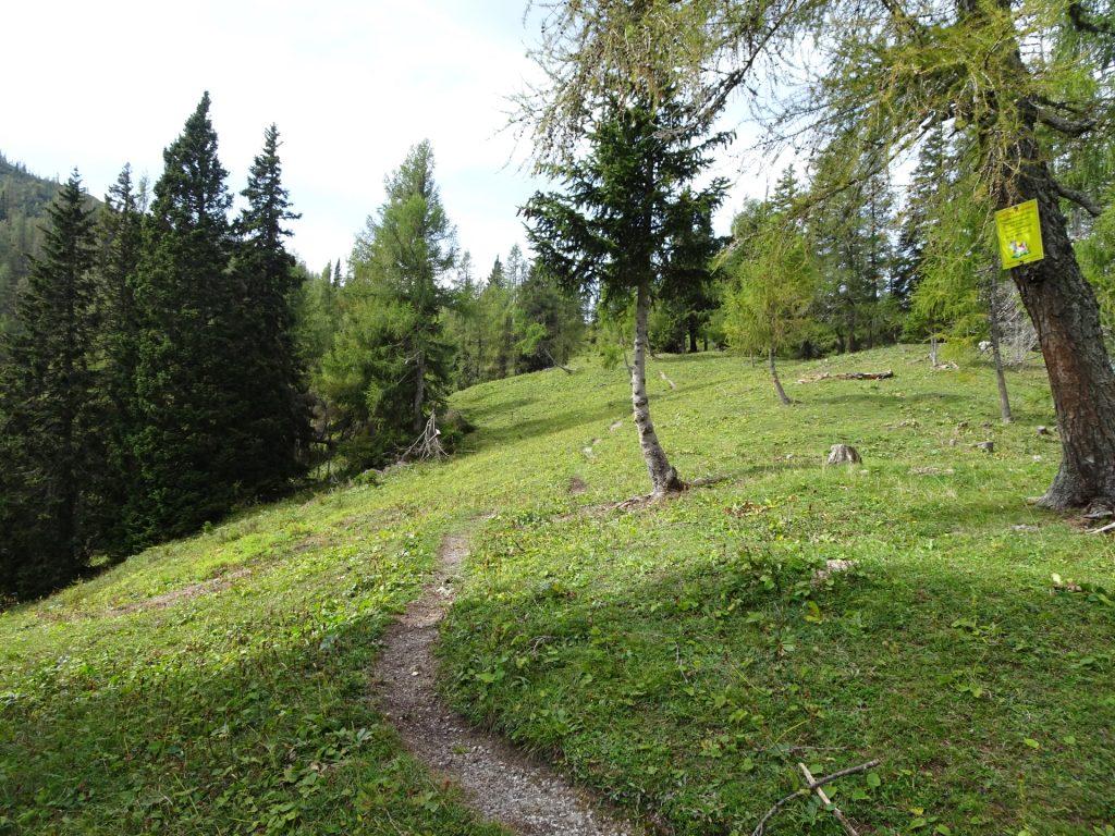 "Turn left here towards the peak of ""Pribitz"""