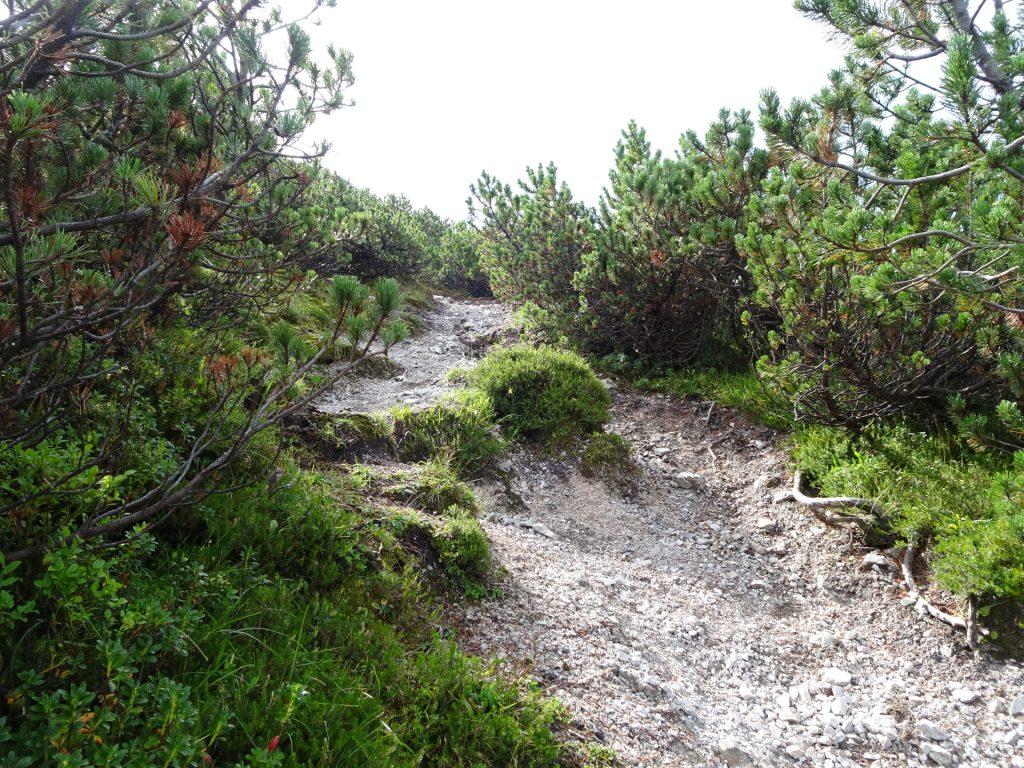 """Trail towards the """"Pribitz"""""""