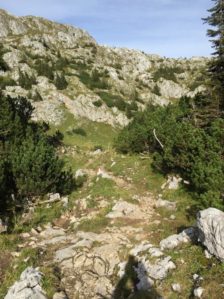 """Trail back to """"Sonnschienalm"""""""
