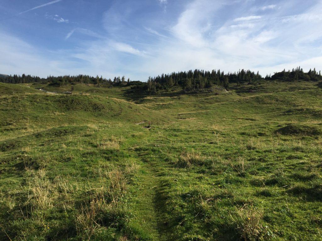"""Trail through the """"Sonnschienalm"""""""