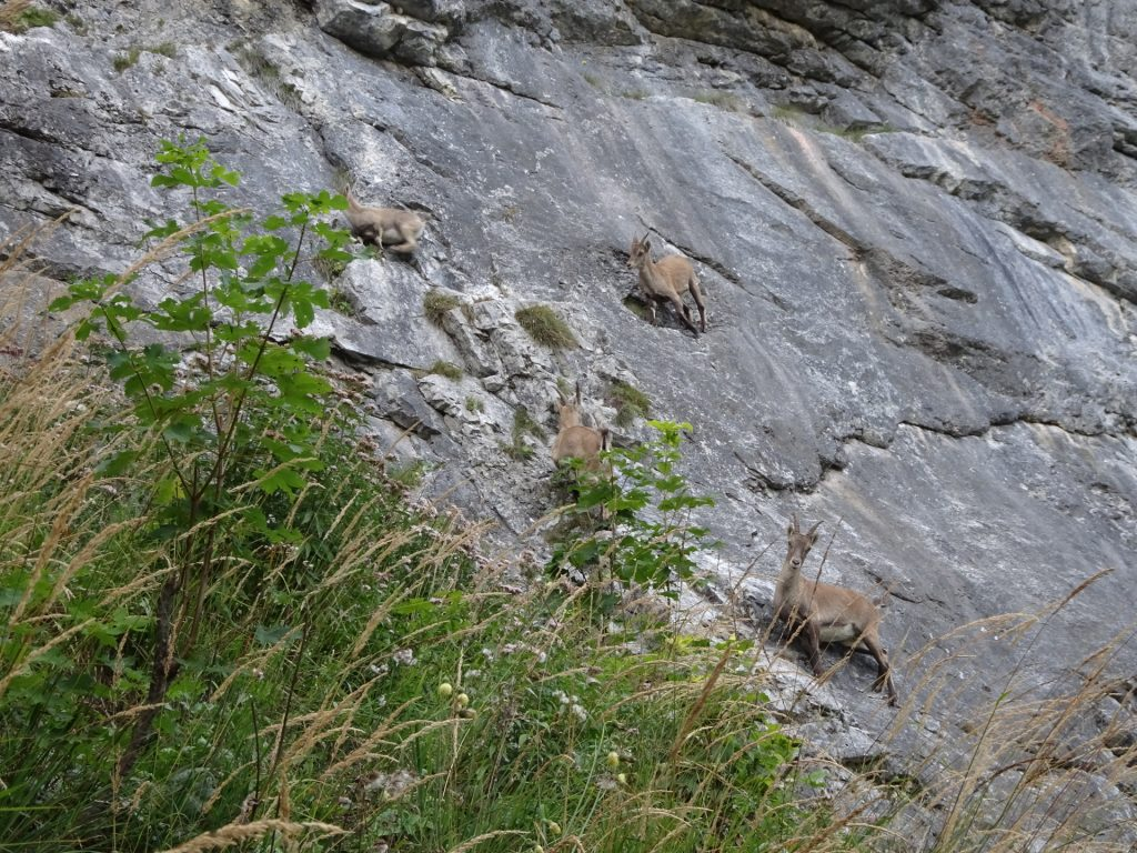Climbing masters