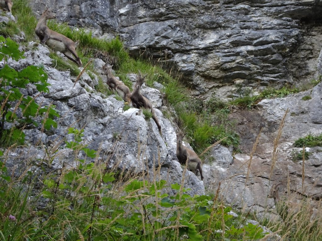 Climbing masters making fun of us