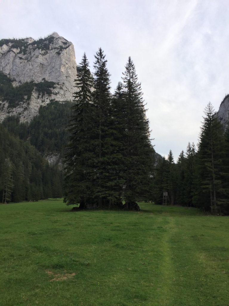 "Iconic trees at the ""Klammboden"""