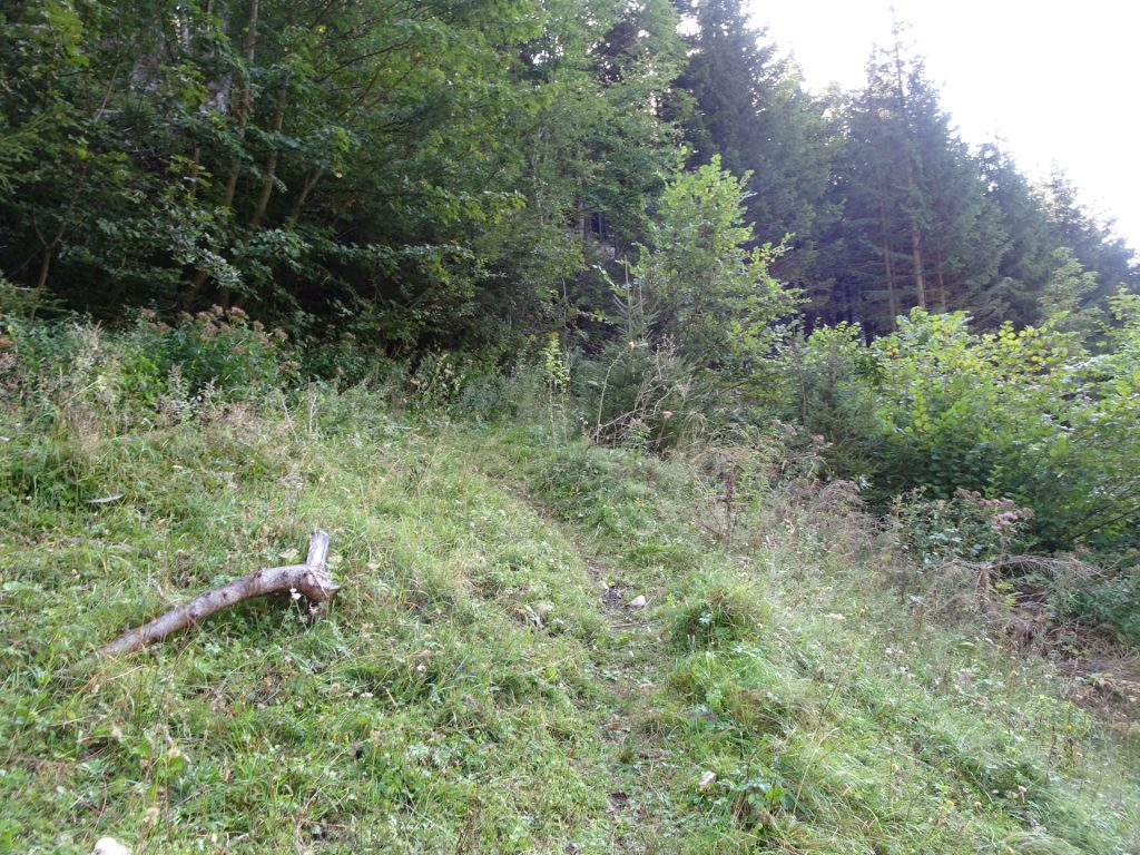 """Hard to find trail (turn right after the mountain pasture) towards the """"Barbarakreuz"""""""