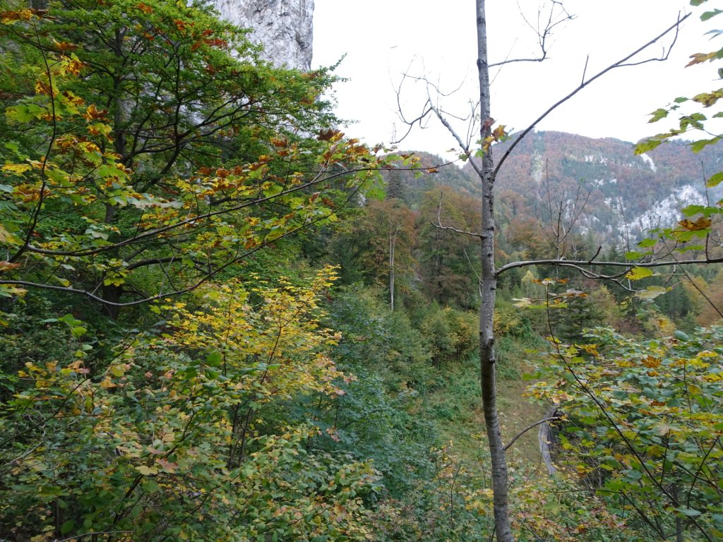 View from the trail towards the street tunnel