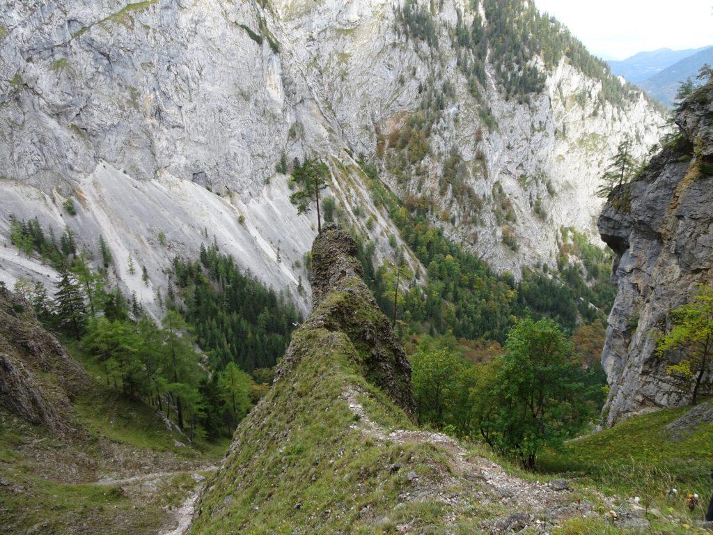 """The iconic tree seen from the """"AV-Steig"""""""