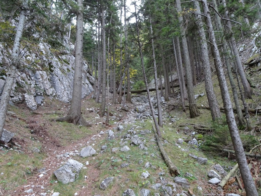 Hiking trail upwards