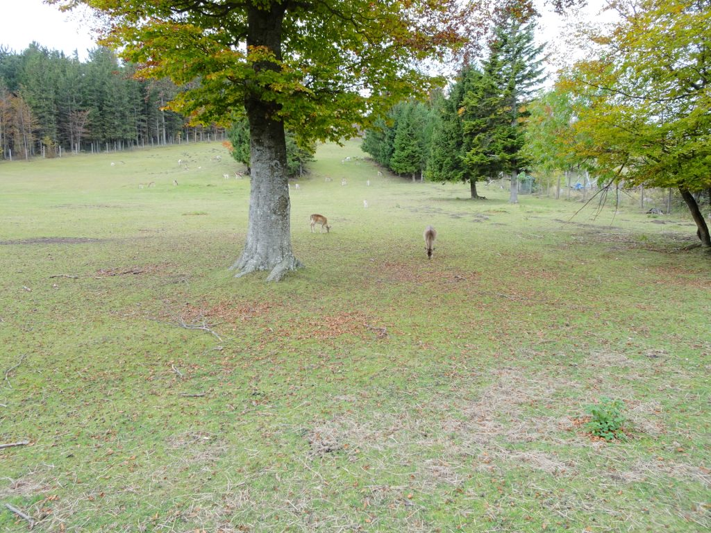 Bypassing the deer compound