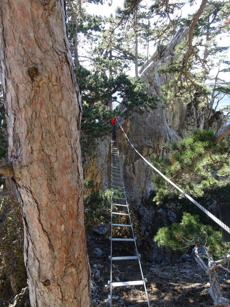GV-Steig: Crossing the rope-way bridge ((8), B)