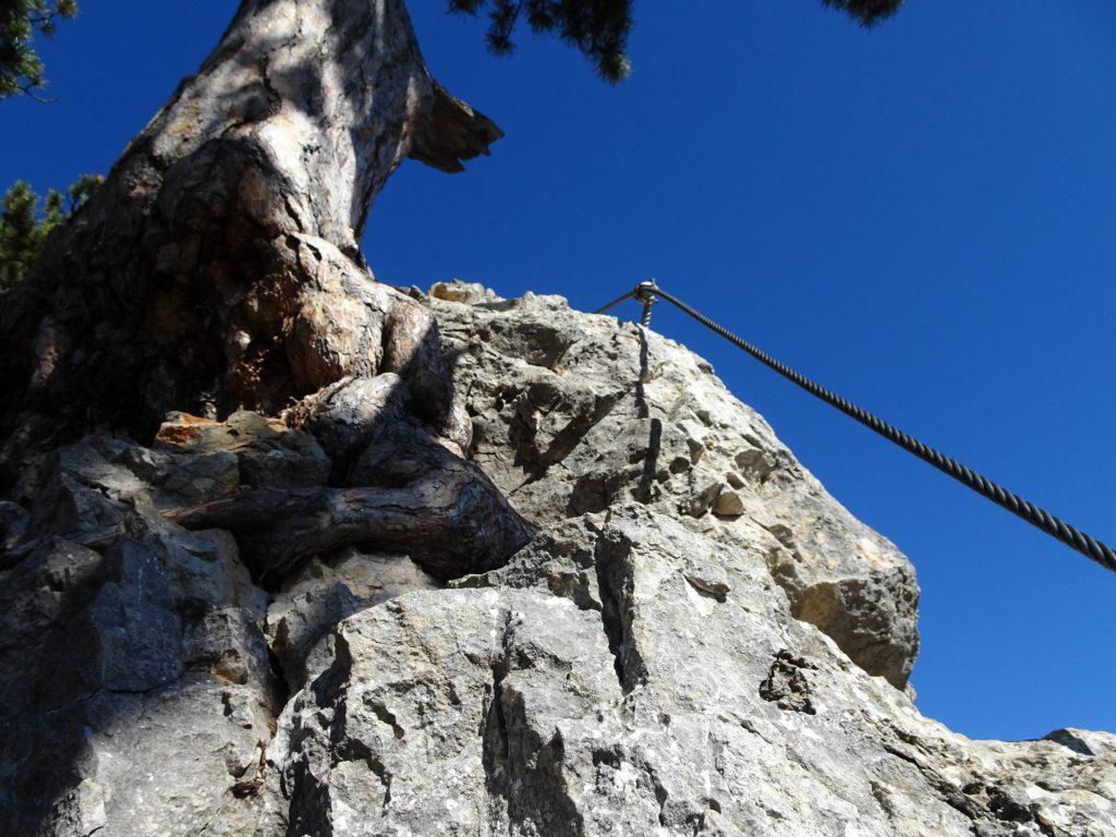 """GV-Steig: At the ridge towards the """"Kyselak"""" rest area ((11), B)"""