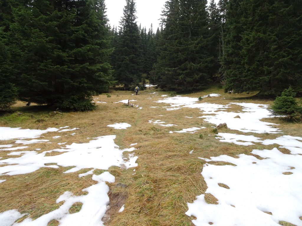 "Trail towards ""Klobelntörl"""