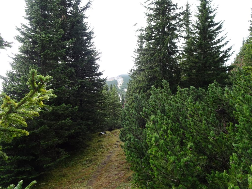 "Trail towards ""Klobentörl"""