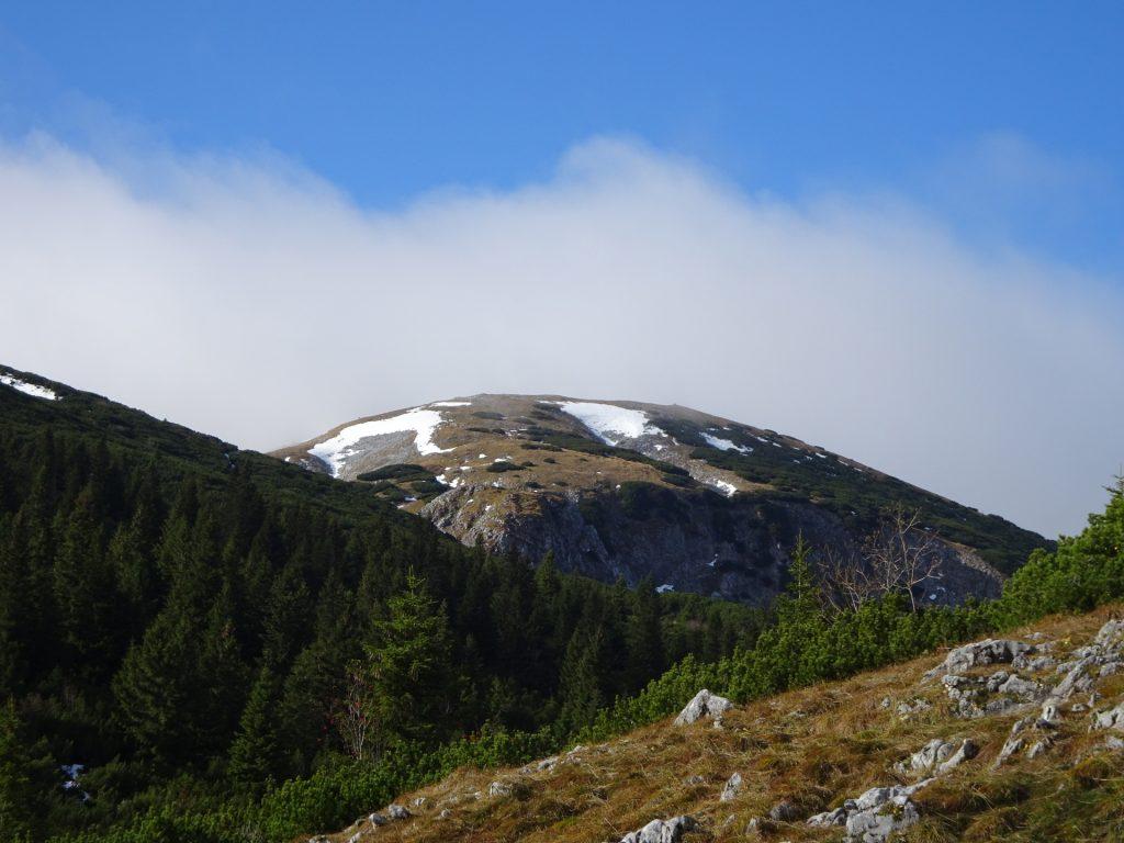 """View towards the """"Scheibwaldhöhe"""""""