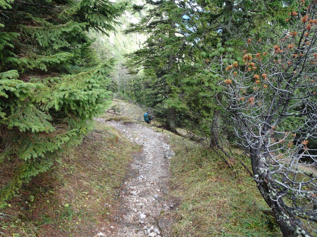 "Descending towards ""Dirnbacherhütte"""
