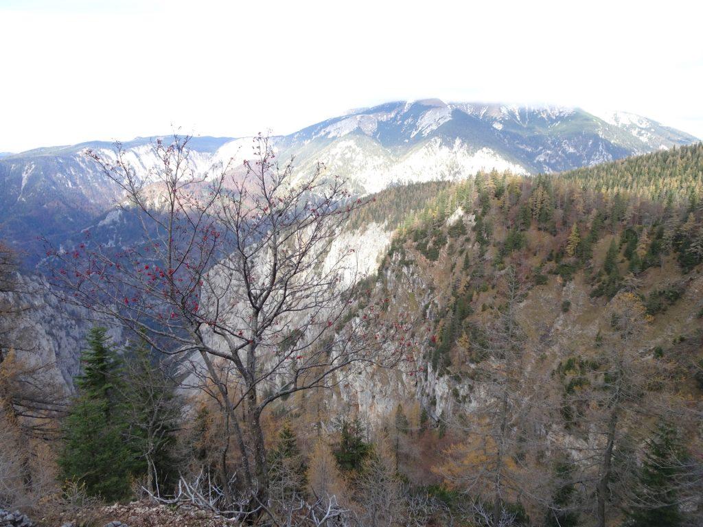 """View towards """"Schneeberg"""" from """"AV-Steig"""""""