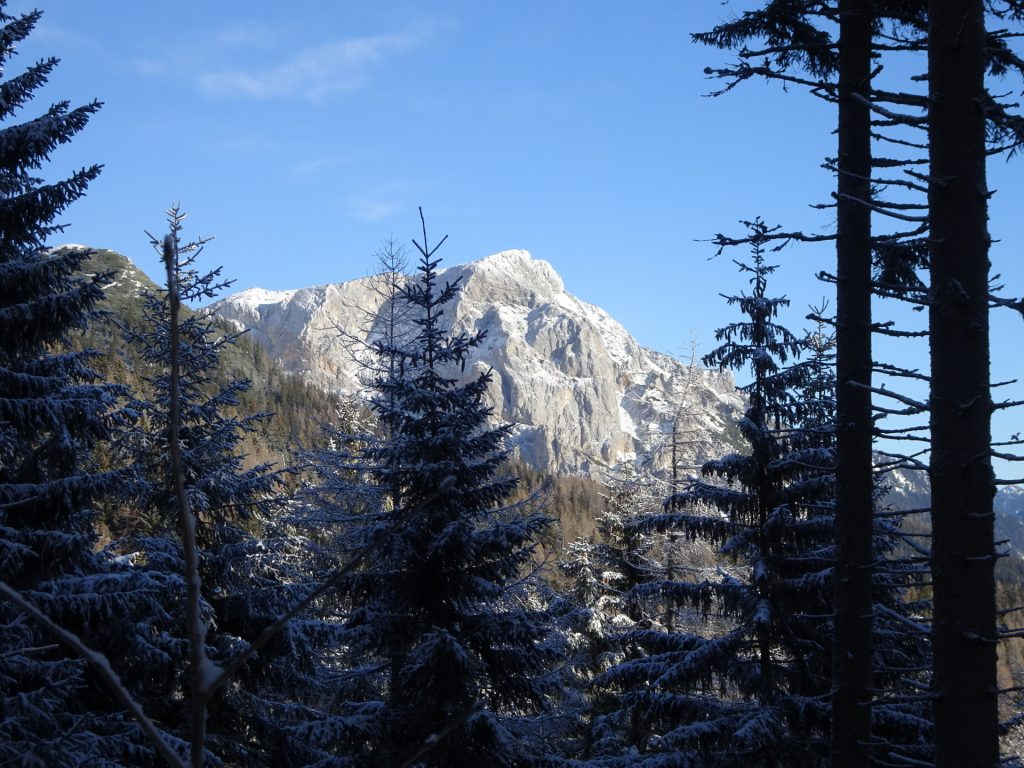 "View from the trail upwards to ""Reißtalersteig"""