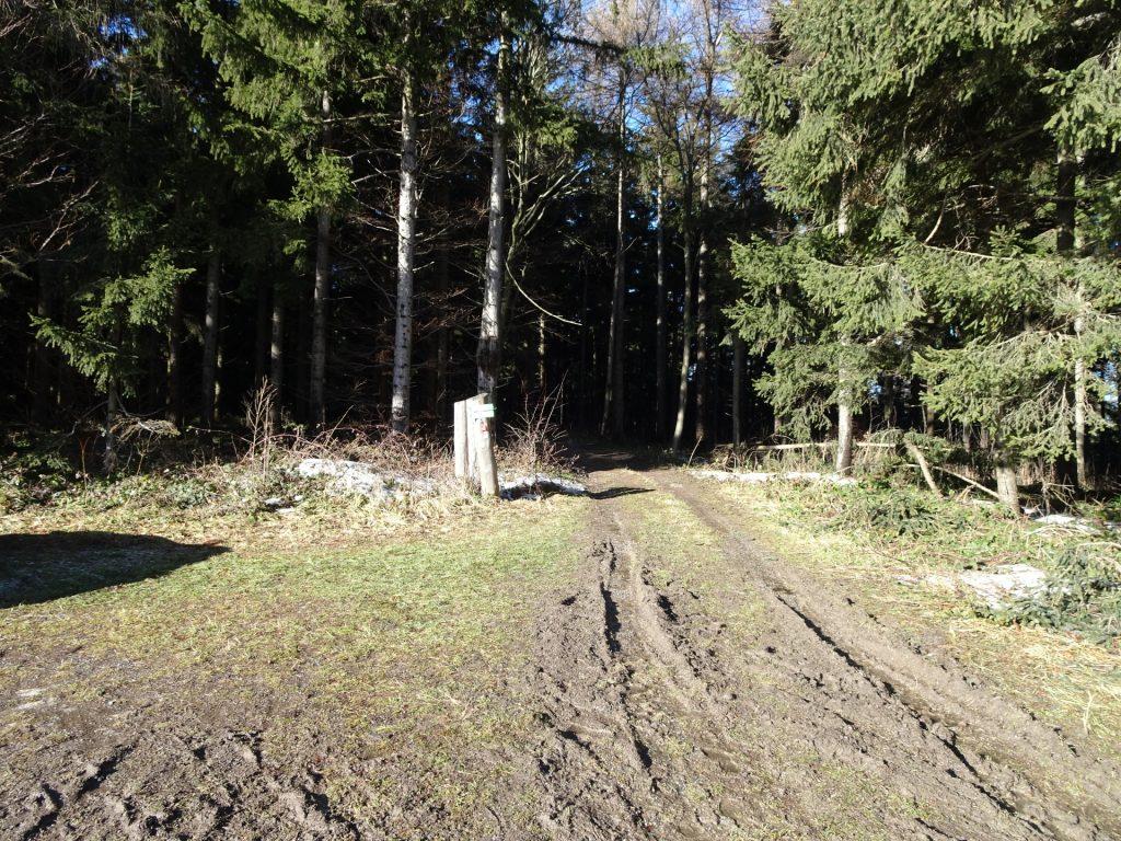 """Trail towards """"Hirschenstein"""""""