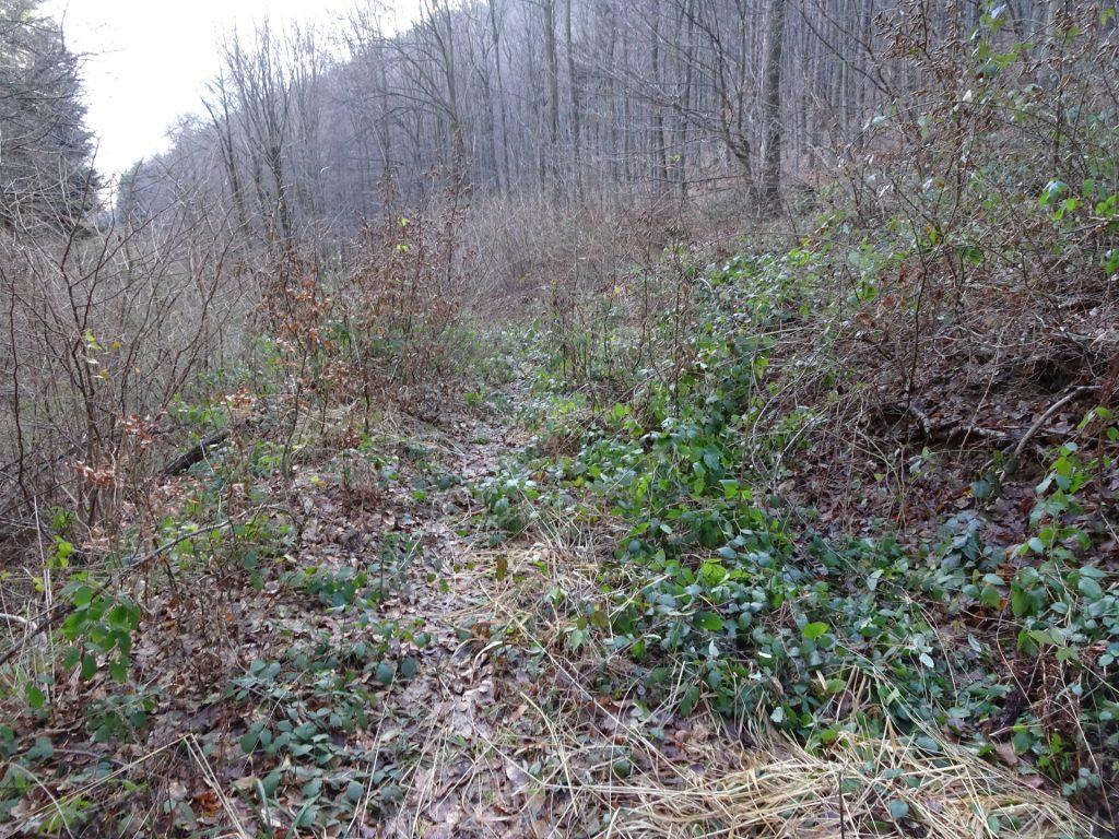 Trail becomes a bit of a jungle
