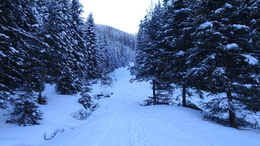 Kaltenbachgraben trail