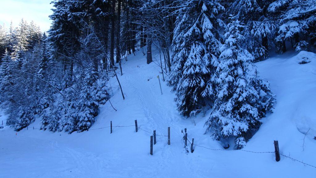 Trail up to Karl-Lechner-Haus