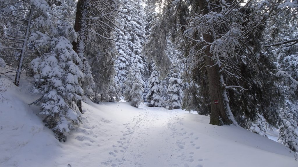 Upper part of the trail (towards Stuhleck)