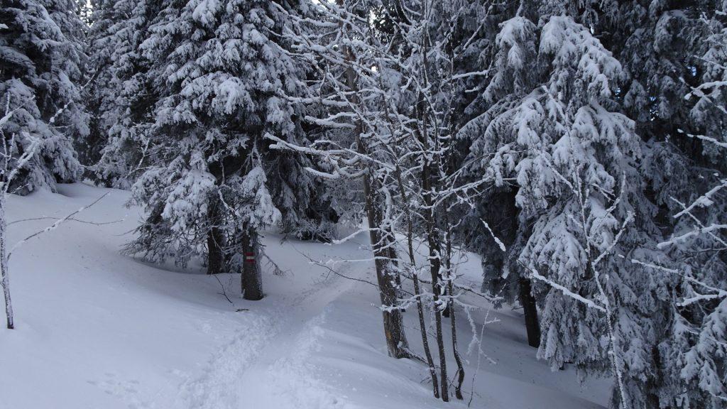 Trail towards Stuhleck